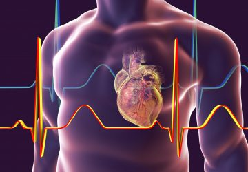 Human heart with heart vessles inside human body and ECG, 3D illustration